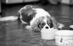 Sue_Ken_Pets-71